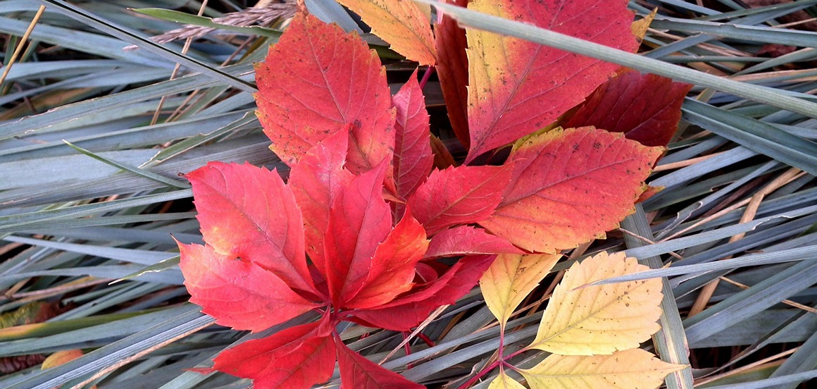 Záhrada v novembri