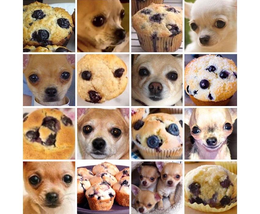 Čivava, Muffin