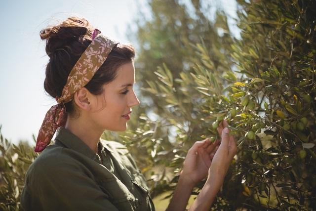Olivy ako zdroj vlasovej výživy