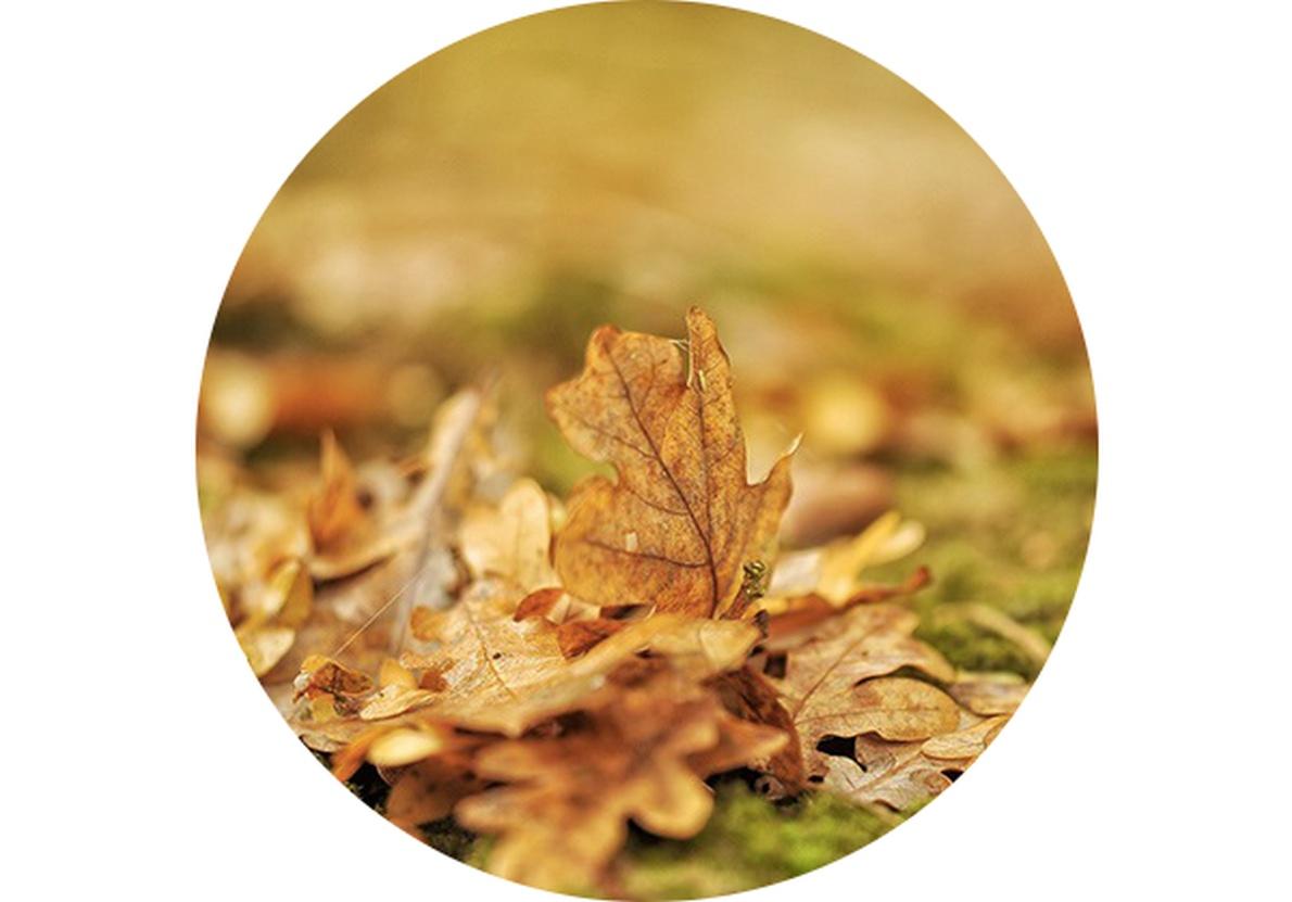 Záhradný kalendár: November na záhrade