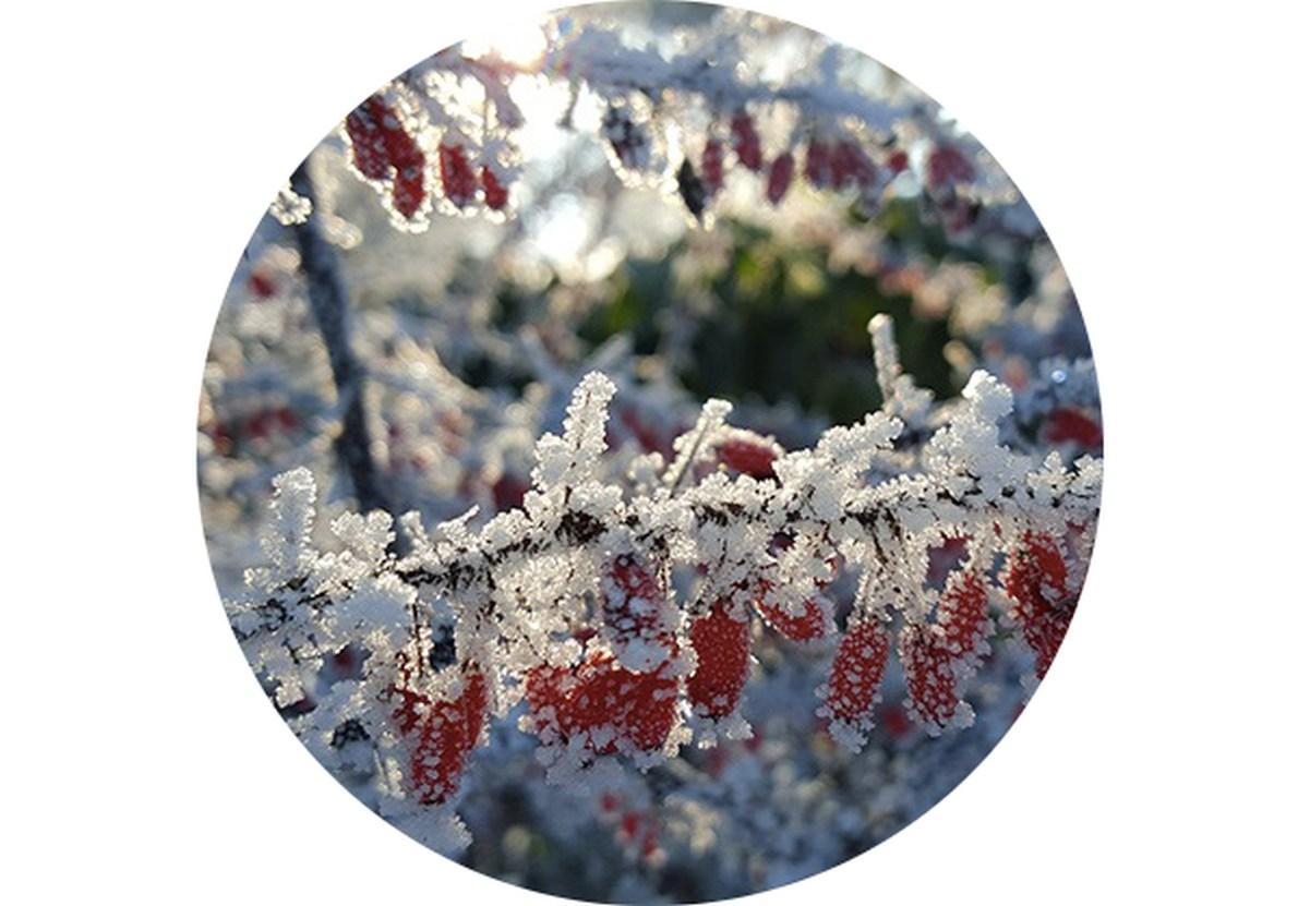 Záhradný kalendár: Február na záhrade