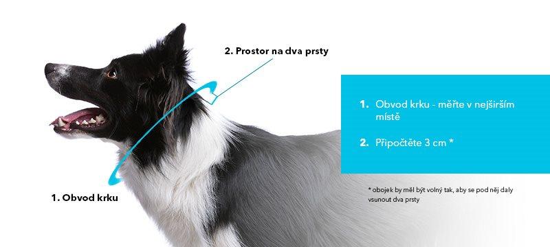 Meranie veľkosti psa - oblečenie